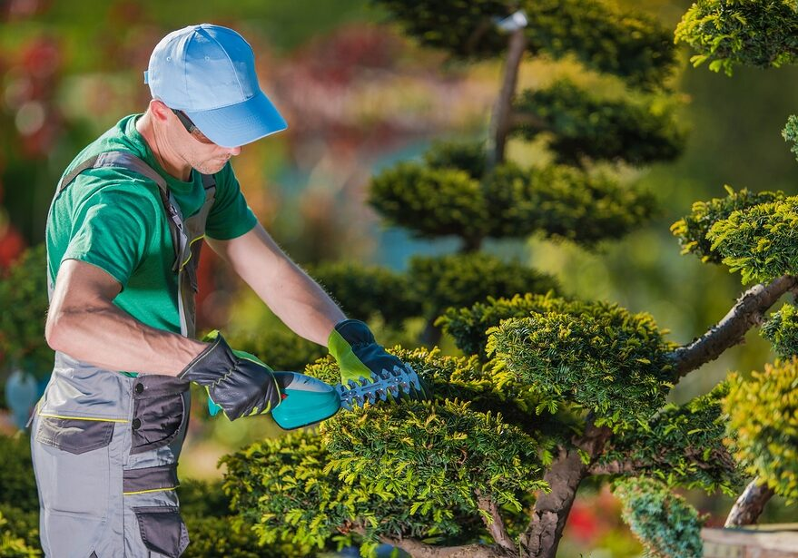 gardener trimming the plant