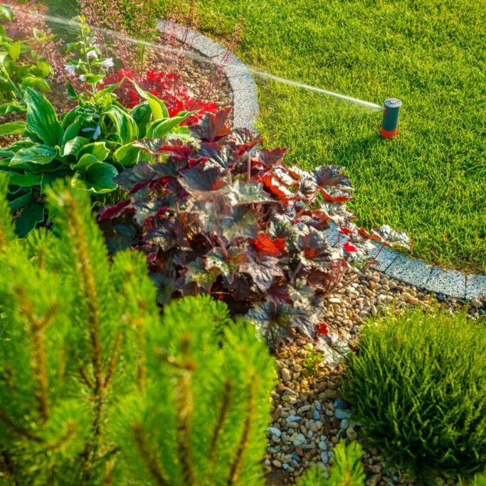 a plant with sprinkler beside